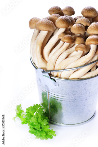 Group of pleurotus