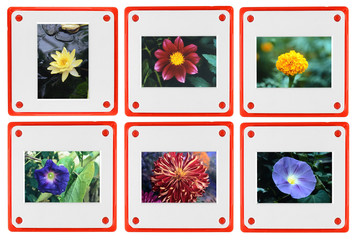 Photo slides of flowers