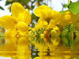 tropical flower reflected in water