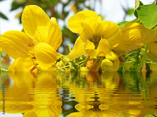 tropical flower reflected in water - 50926213