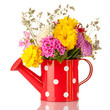 Red watering can with white polka-dot with flowers isolated