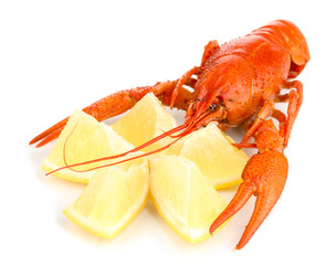 Tasty boiled crayfish with lemon isolated on white