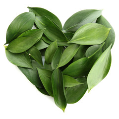 heart of beautiful green leaves, isolated on white
