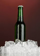 Beer bottle in ice on darck red background
