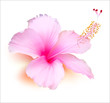 Flower vector. Hibiscus tropical plant nature illustration