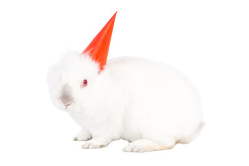 Lovable white bunny rabbit in a party hat