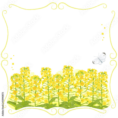 春 菜の花 蝶 Framed Canola flowers with copy space