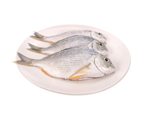 Fish in the plate