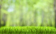 spring green abstract forest natural background