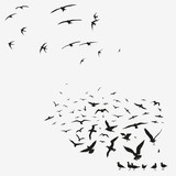 pack of seagulls and swallows - 50944268