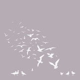 pack of seagulls poster - 50944285