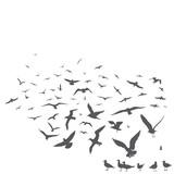 seagulls - 50944298