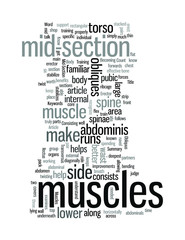 Know Your Muscles The Mid Section