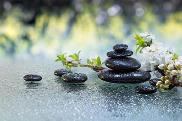 pietre nere e fiori di mandorlo con gocce d'acqua