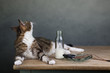 Katze und Hering