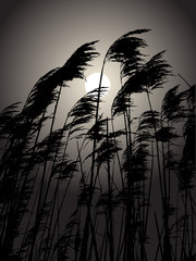 Moon in the rushes