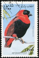 stamp printed in Afghan shows Pyromelana orix