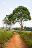 Path in World heritage, Kao Yai National park
