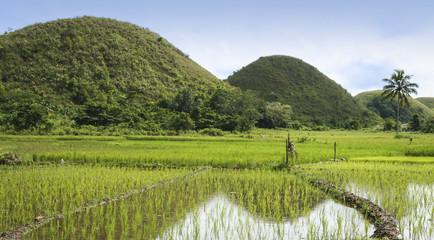 chocolate hills bohol island philippines