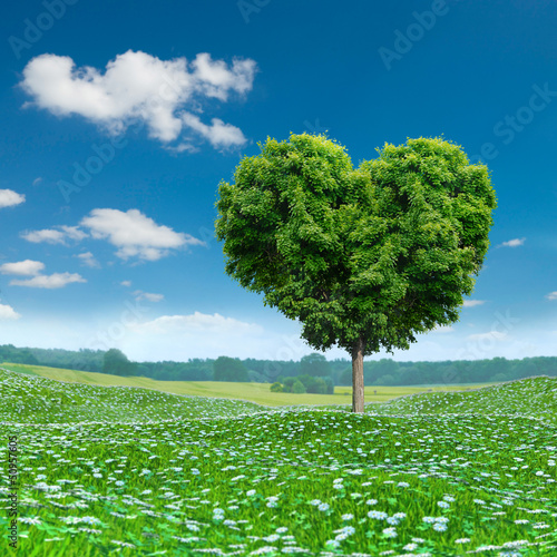 Heart shaped Tree green foliage, nature love