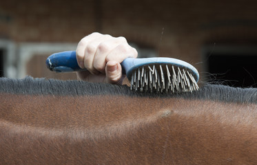 Brushing a horse