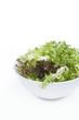 Fresh salad leaves Lettuces. Spring mix. Eat fresh