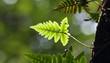 Green lush ferns
