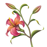 red abstract tropical lily flower illustration