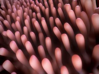 3d rendered illustration of the colon villi