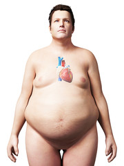 3d rendered illustration of an overweight man - heart