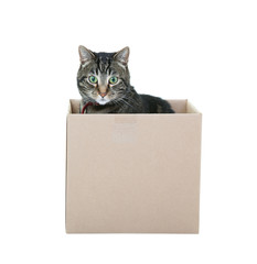 Tabby in a Box