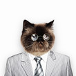 Funny fluffy cat in a business suit