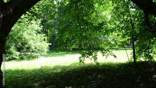 park view old lime tree branches green leaves beautiful sunlight