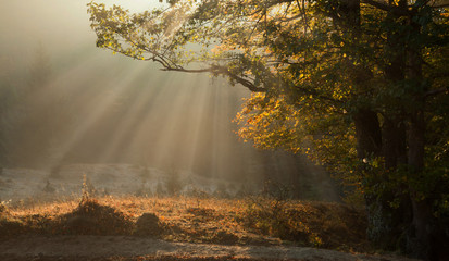 Morning sun rays during autumn