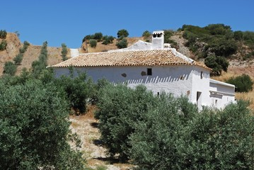 Farmhouse in olive grove, Olvera, Spain © Arena Photo UK
