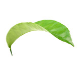 Curving a green leaf