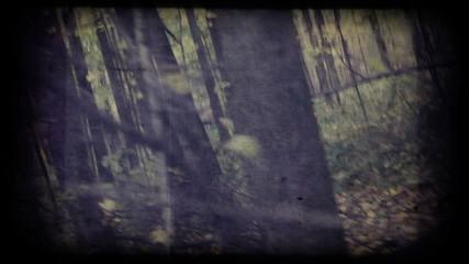Vintage camera moves through autumn woods.