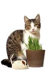 Katze sitzt vor ihrem Katzengras