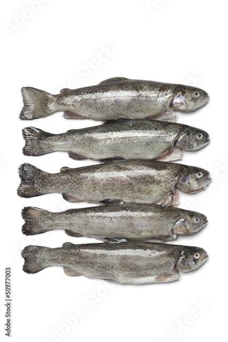 Fresh trouts
