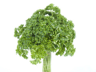 tree from parsley