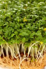 Fresh cress salad closeup