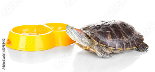 red ear turtle and feeder isolated on white