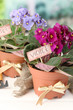 Bright saintpaulias and garden tools on natural background
