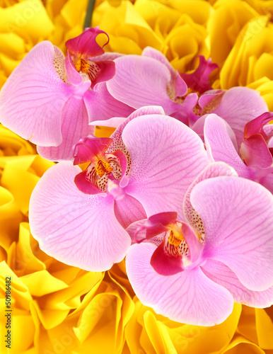 Gentle piękny storczyk na żółtym tle