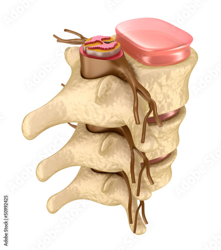 Human spine in details - 50992425