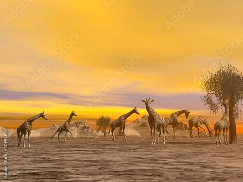 Naklejka Giraffes in the savannah - 3D render