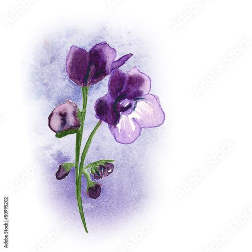 African Violet © Heidrun Gellrich