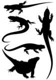 lizards fine silhouettes - black outlines over white