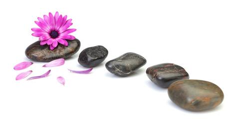 Flower osteospermum decoration concept of health spas. On a whit