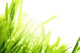 Fresh grass and sunlight